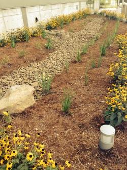 Bioswale-and-Rain-Garden