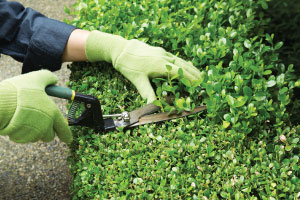 Trimming lawns and hedges in NWA