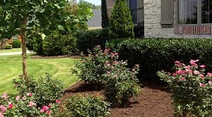 Landscape Garden Flowerbed and lawn care